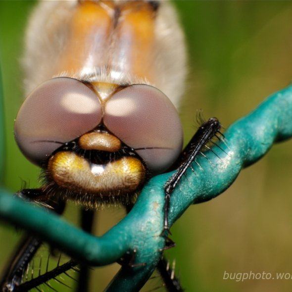 dragonfly hanging on chicken wire