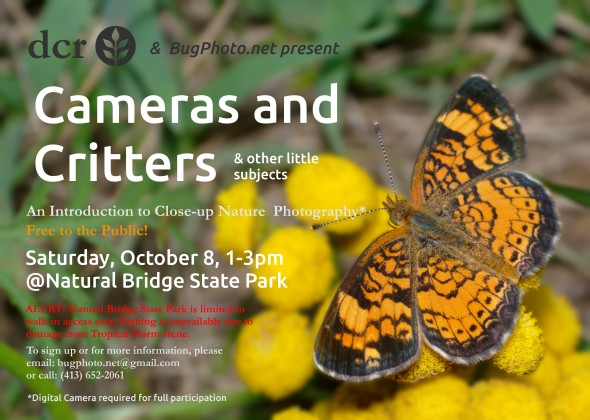 BugPhoto.net Cameras and Critters Flyer
