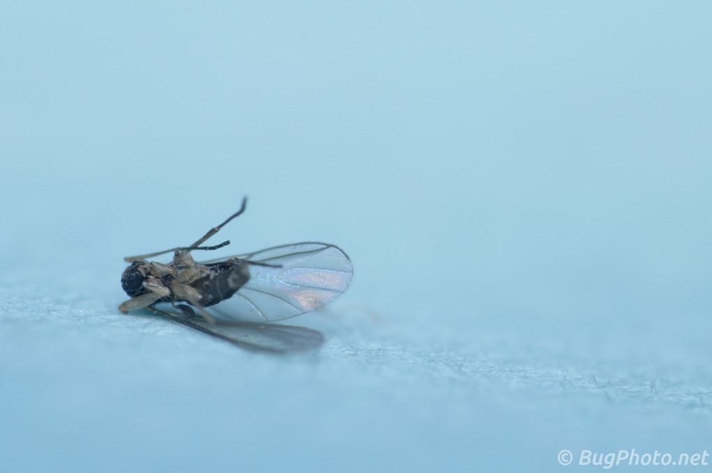 Dead Bug in January
