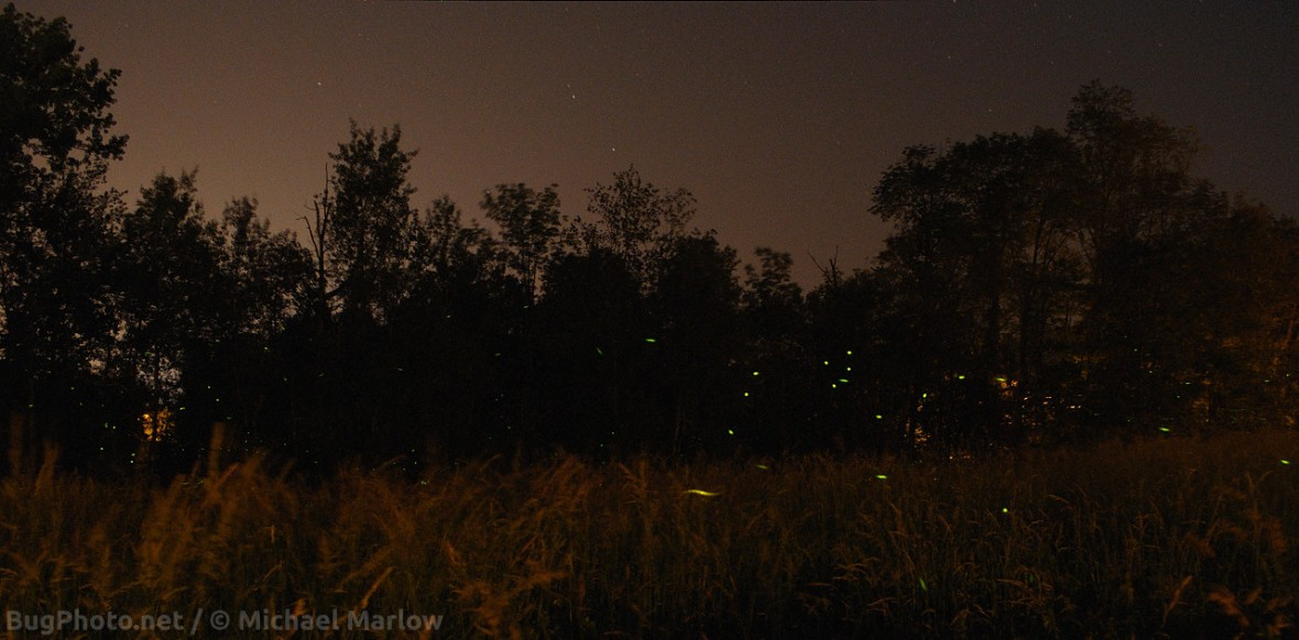green lightning bug lights in a field