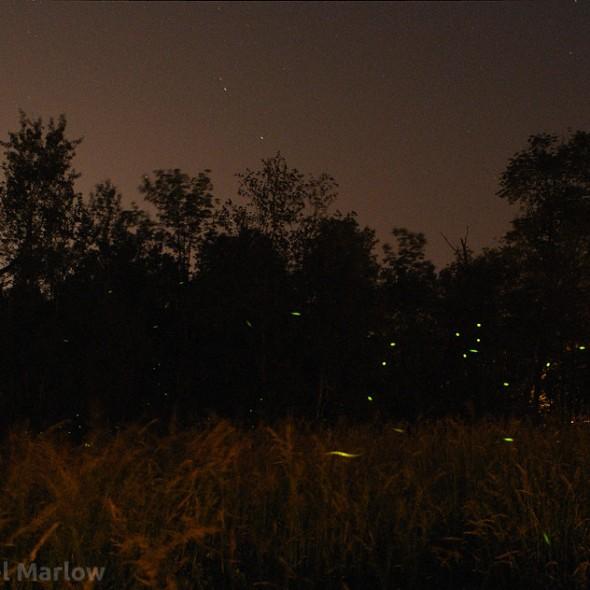 green lightning bug lights in a field