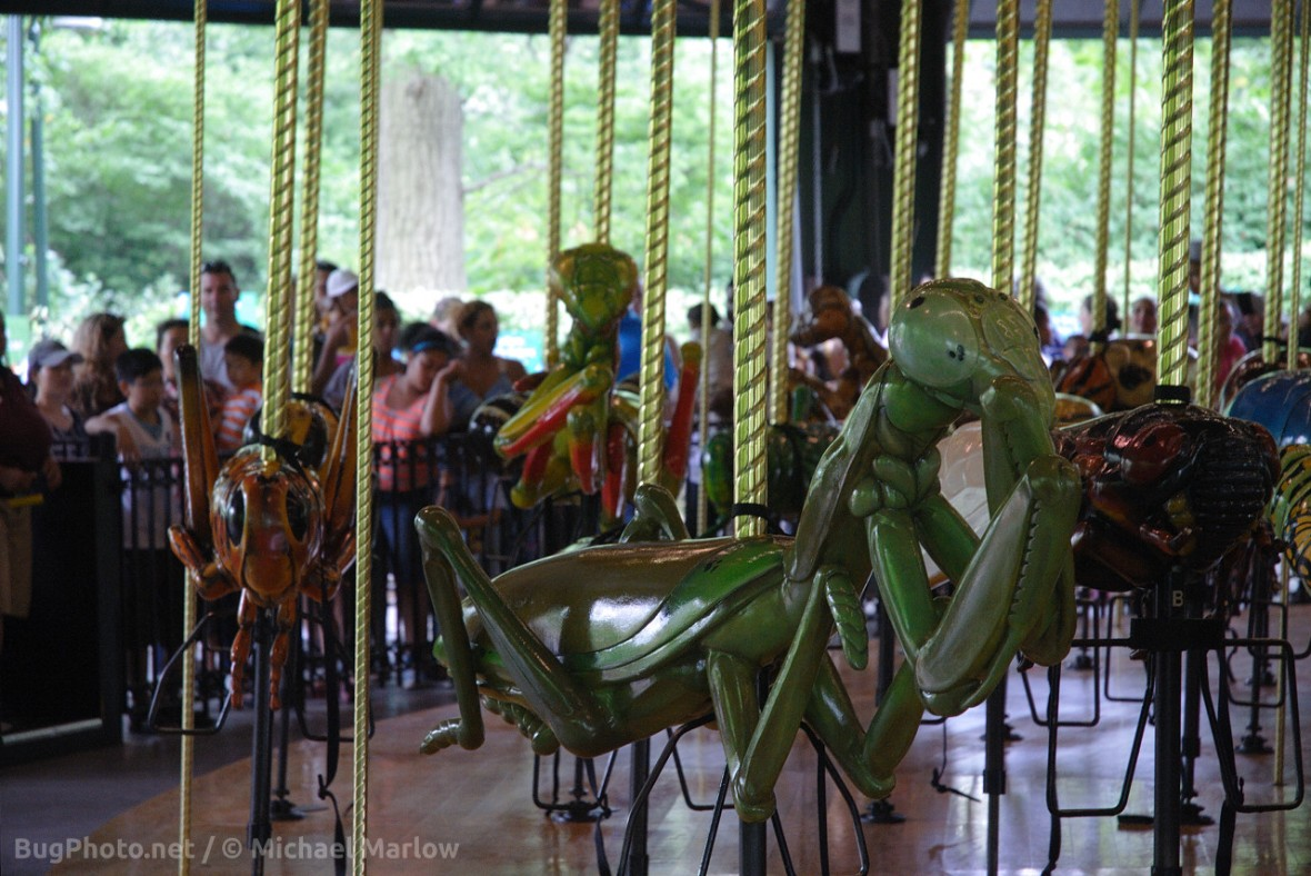 mantis carousel seat with line of people in background