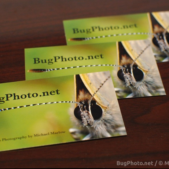 business cards for BugPhoto.net