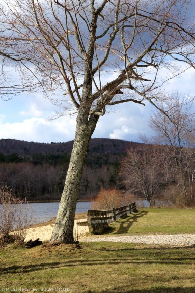 tree and benches at beach pond