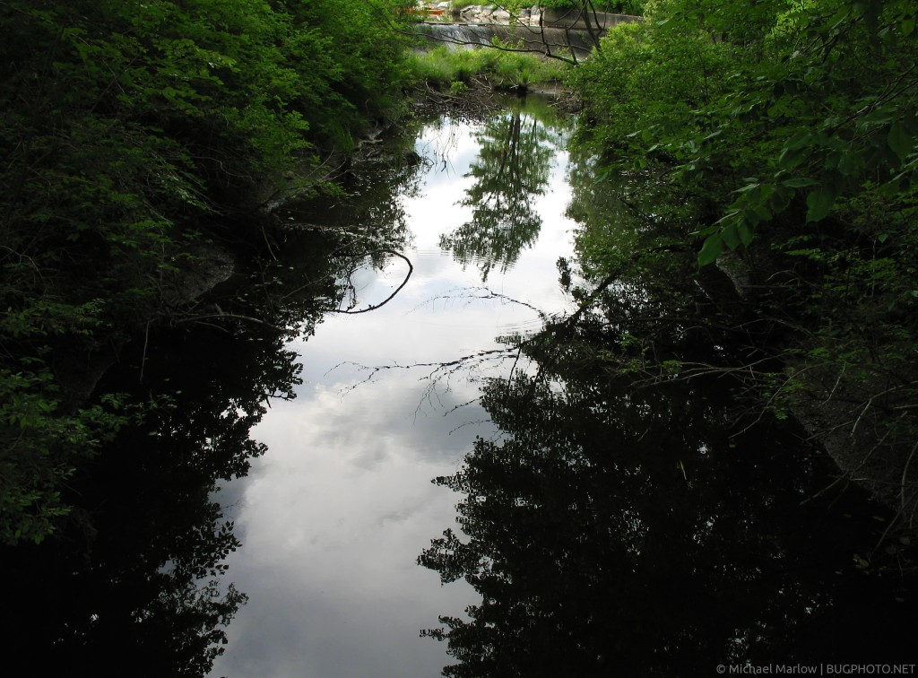 Reflection of Clouds and tree in a stream in Clarksburg State Park