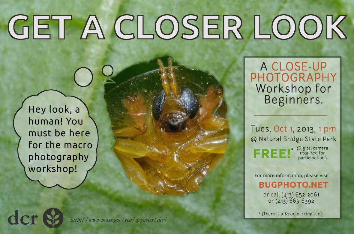 flyer for close up photography workshop [beetle peeking through hole in leaf]