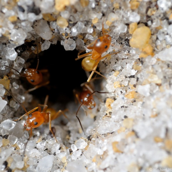 four ants exit nest entrance in sand