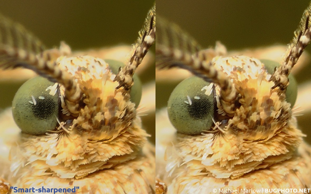 photo sharpening comparison moth head example