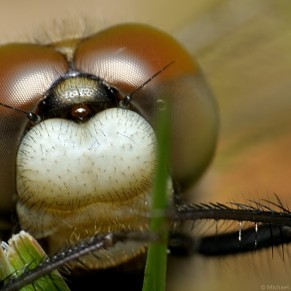 portrait of dragonfly clinging to blades of grass