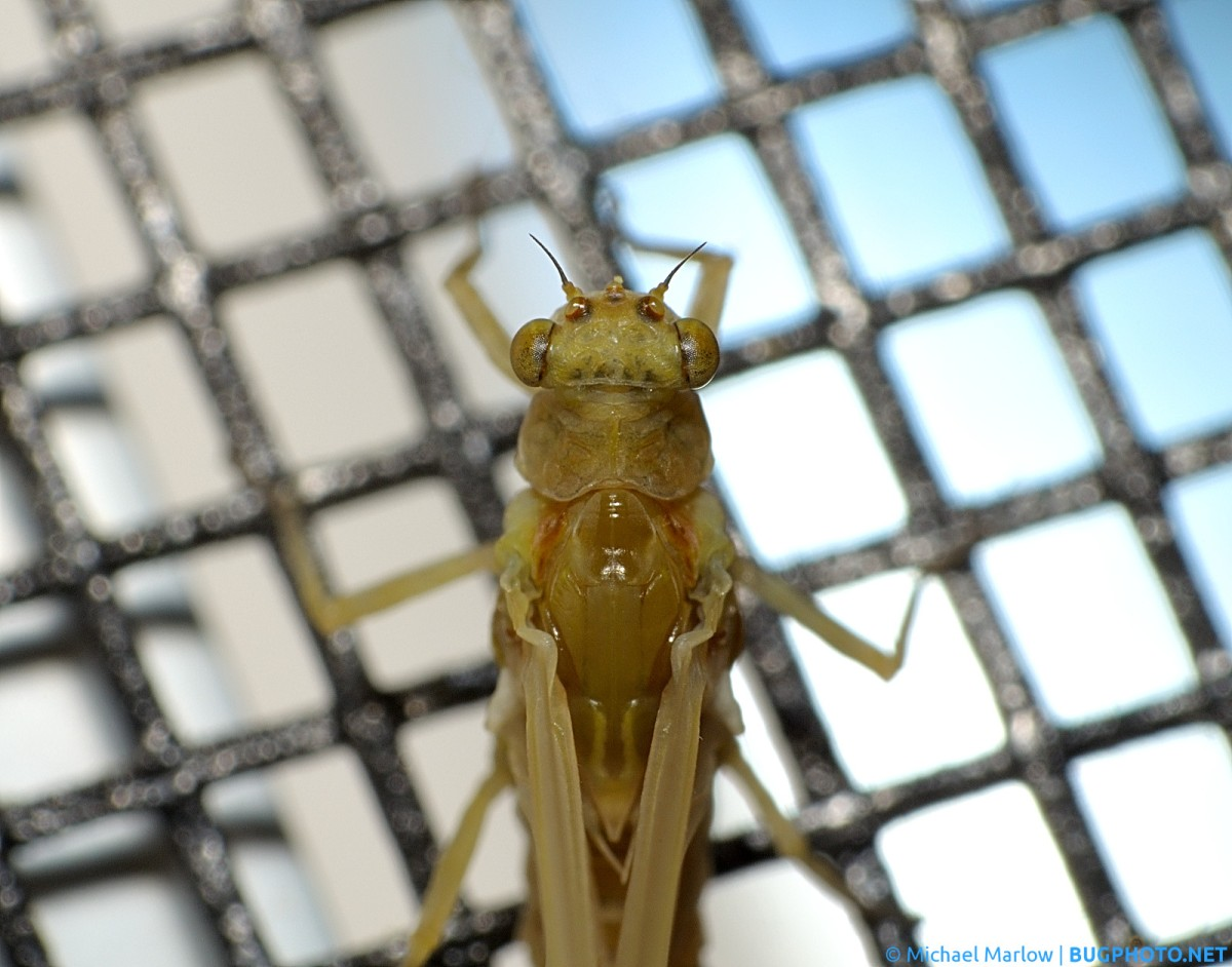 Mayfly Waiting on a Screen