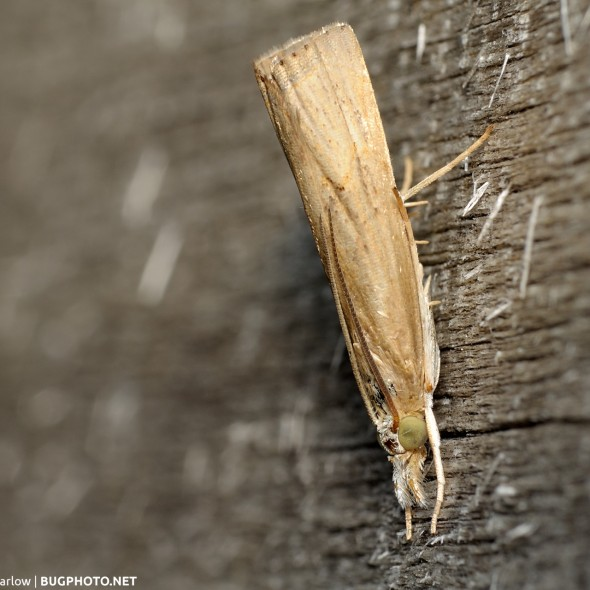 moth resting on rough wooden surface