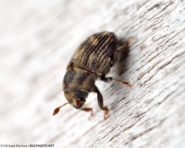 small beetle on wood