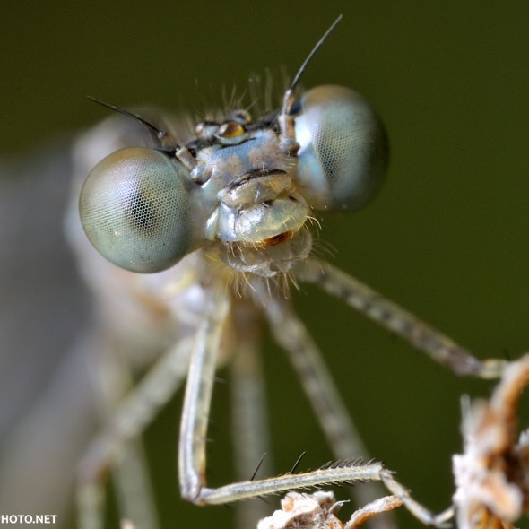 damselfly perched