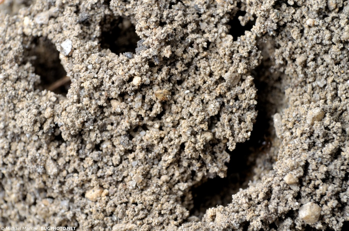 multiple anthill holes in soil resembling a smiley face