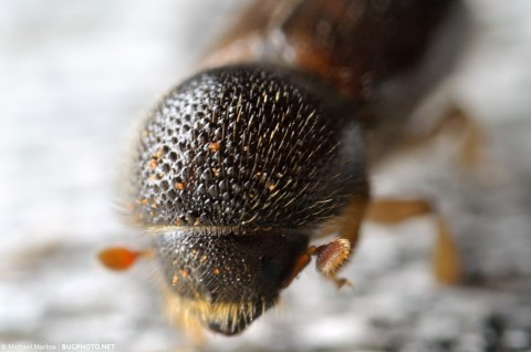 extreme close up of beetle head