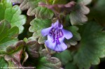 small purple wild flower