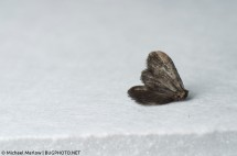 A dead moth, shot with a reverse lens at 45mm