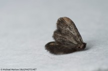 A dead moth, shot with a reverse lens at 35mm