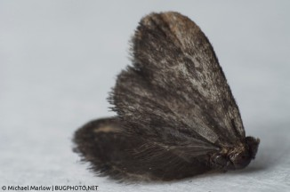 A dead moth, shot with a reverse lens at 24mm