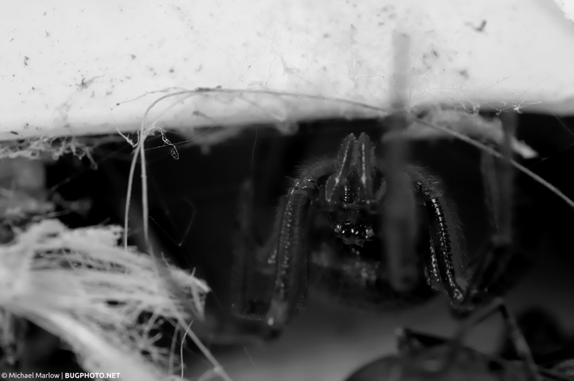 spider lurking in shadows beneath siding