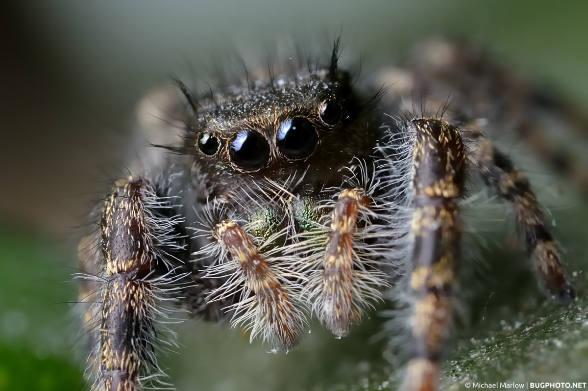 Spiders Like Me