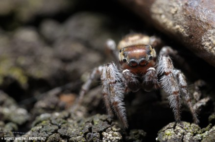jumping spider in shadow