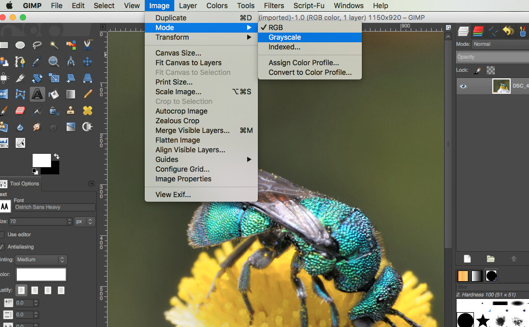 menu for grayscale in GIMP Mac