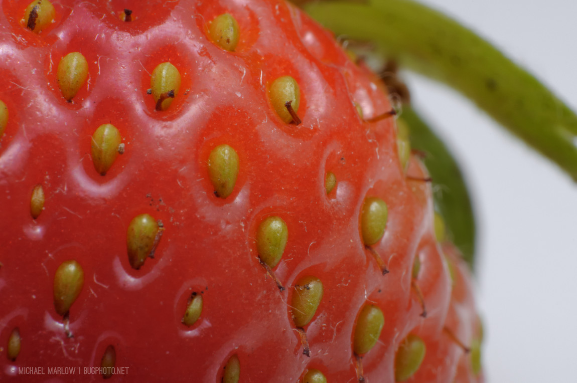 strawberry seeds on curve of fruite with green blurred leaves in background