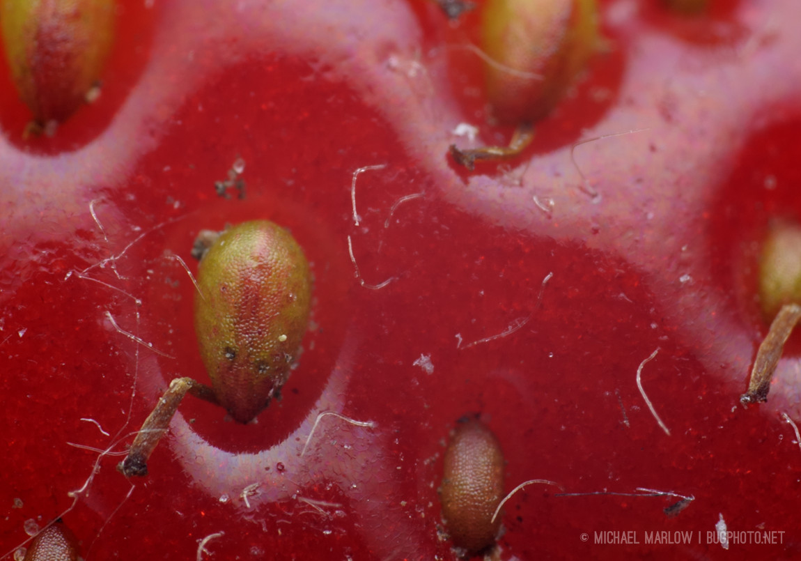 super macro of strawberry seed and skin