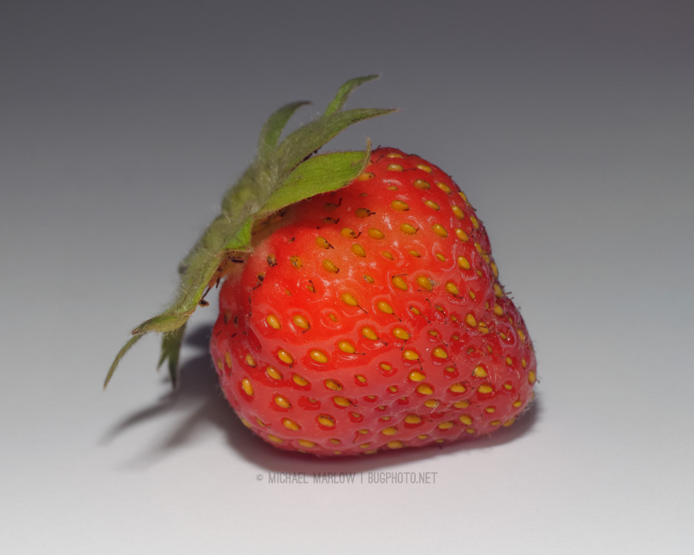Strawberry with yellow seeds on a shadowed background
