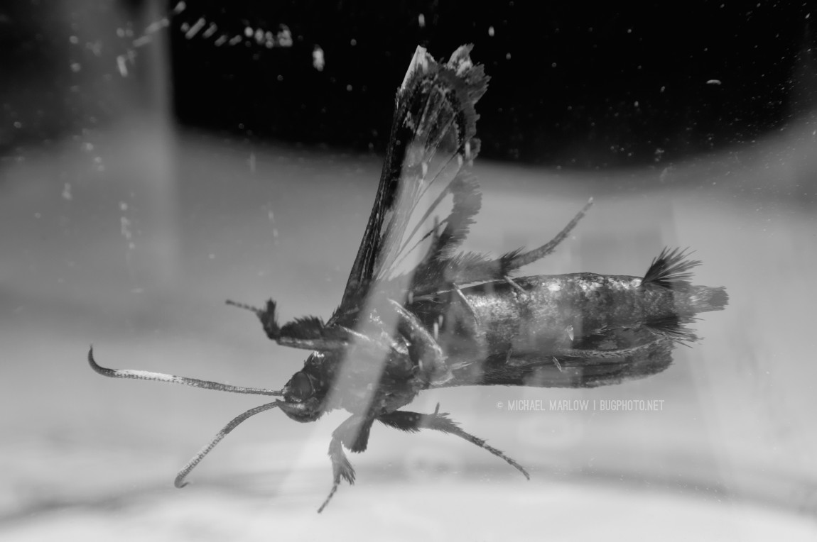 moth clinging to side of glass with glare streaks