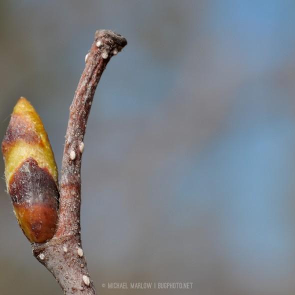 Unidentified bud