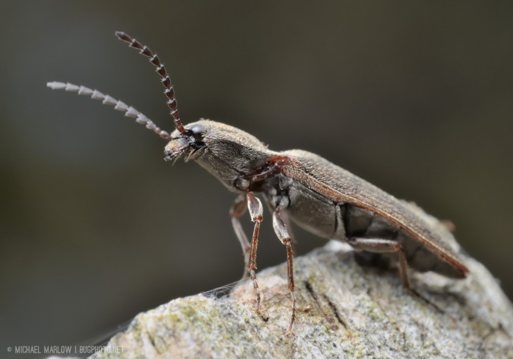 brown click beetle sitting on edge of a wooden post