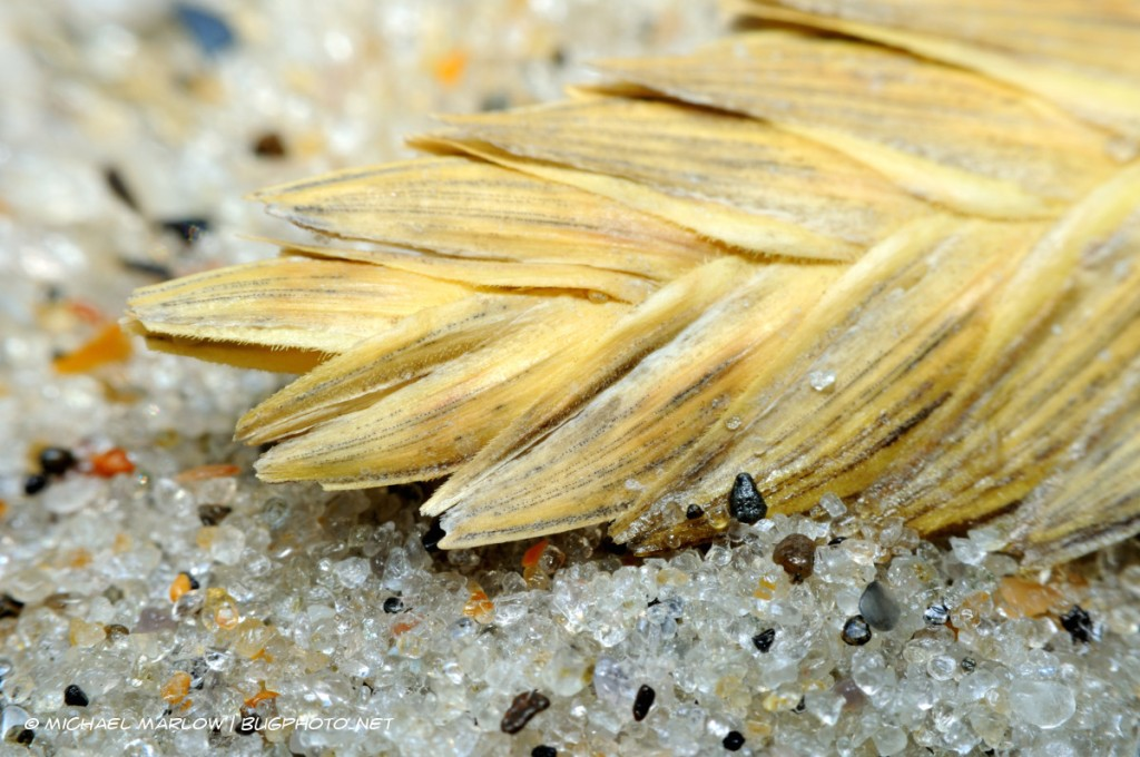 dried grass frond sitting on grains of sand