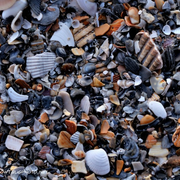 layer of shells, stones, and other beach debris
