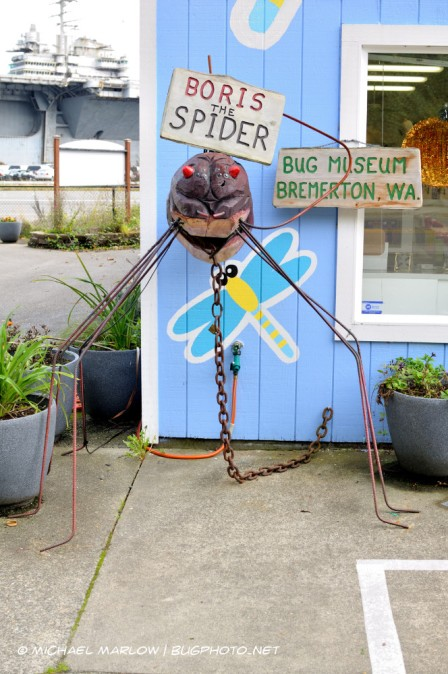 """Boris the Spider"" sculpture at ""Bug Museum Bremerton, WA"" in front of store"