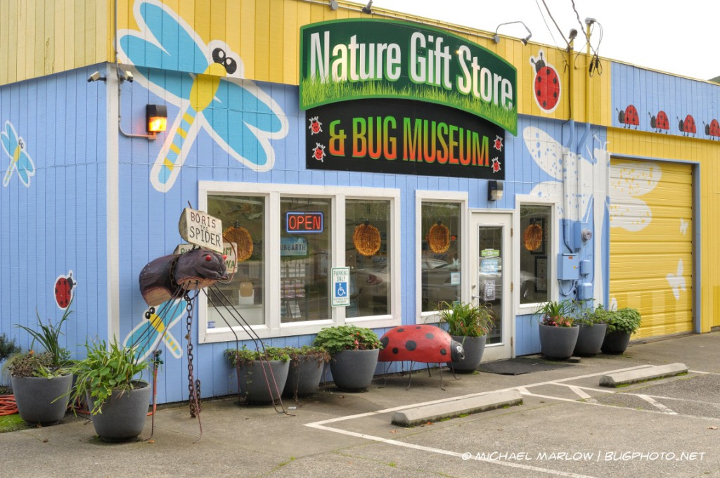 """Nature Gift Store & Bug Museum"" storefront with regalia of dragonflies ladybugs and ""Boris the Spider"""