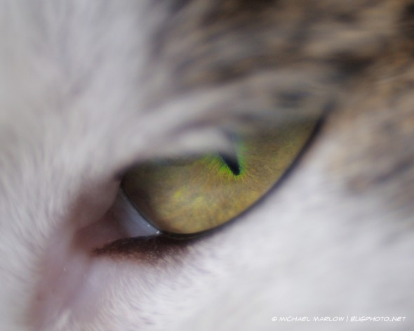 golden iris and bright green outlined pupil of half-open cat's eye
